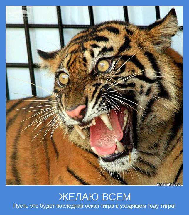 оскал тигра на рабочий стол