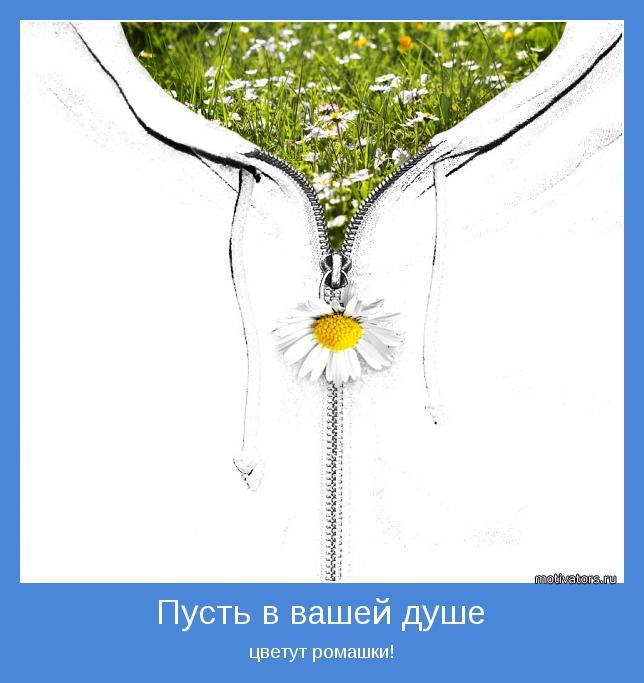цветут ромашки!