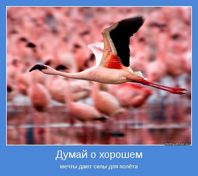 мечты дают силы для полёта