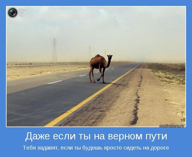 Тебя задавят, если ты будешь просто сидеть на дороге