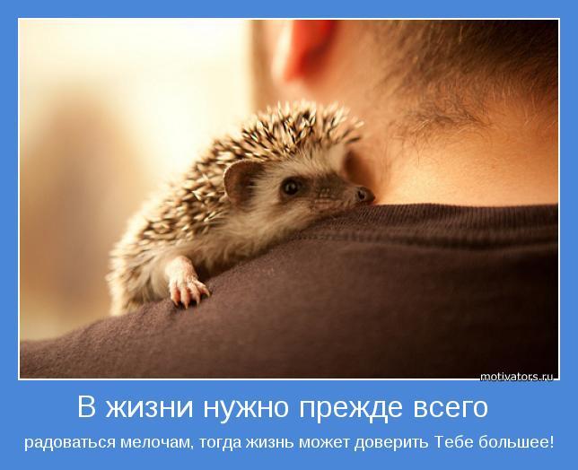 картинки радости жизни