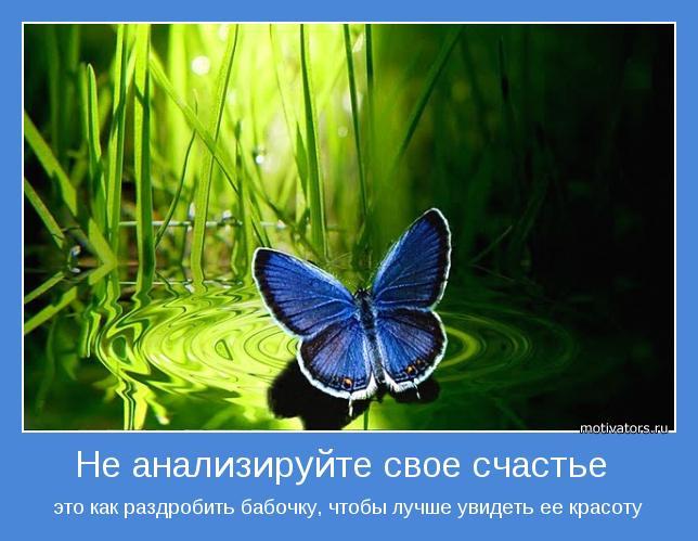 Цитата про бабочек на английском