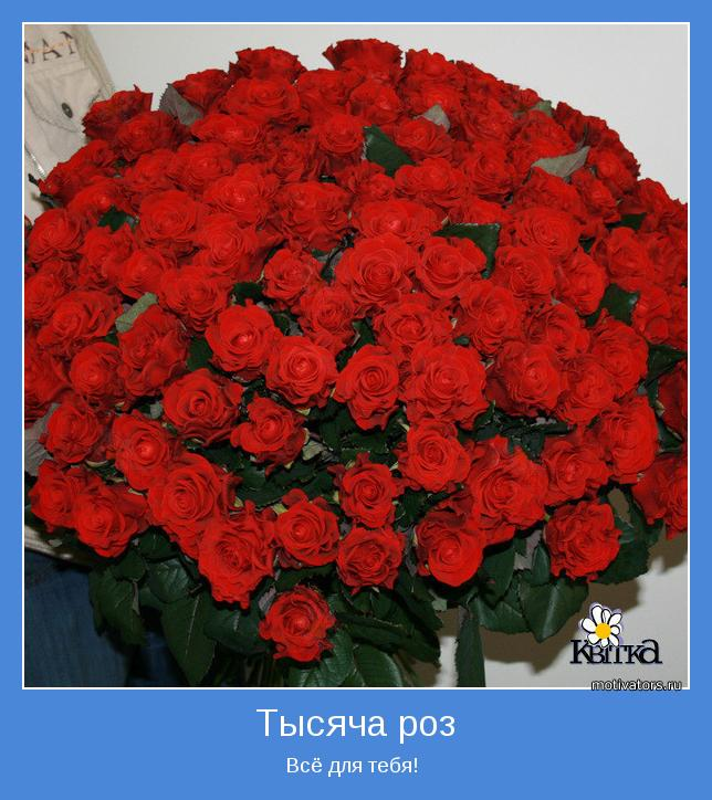 Поздравление 101 роза 99