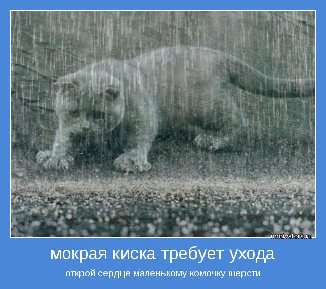 Фото мокрых кис hd 26 фотография