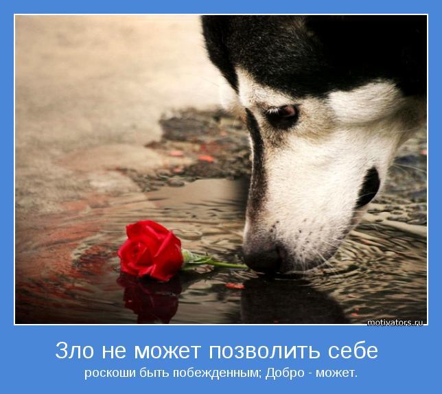 http://motivators.ru/sites/default/files/imagecache/main-motivator/motivator-26464.jpg