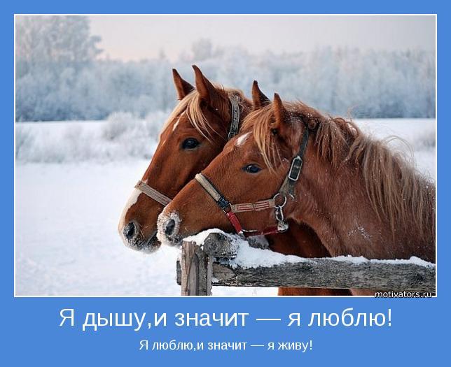 Как-то вспомнились слова из баллады о любви владимира высоцкого: если не любил, значит и не жил, и не дышал
