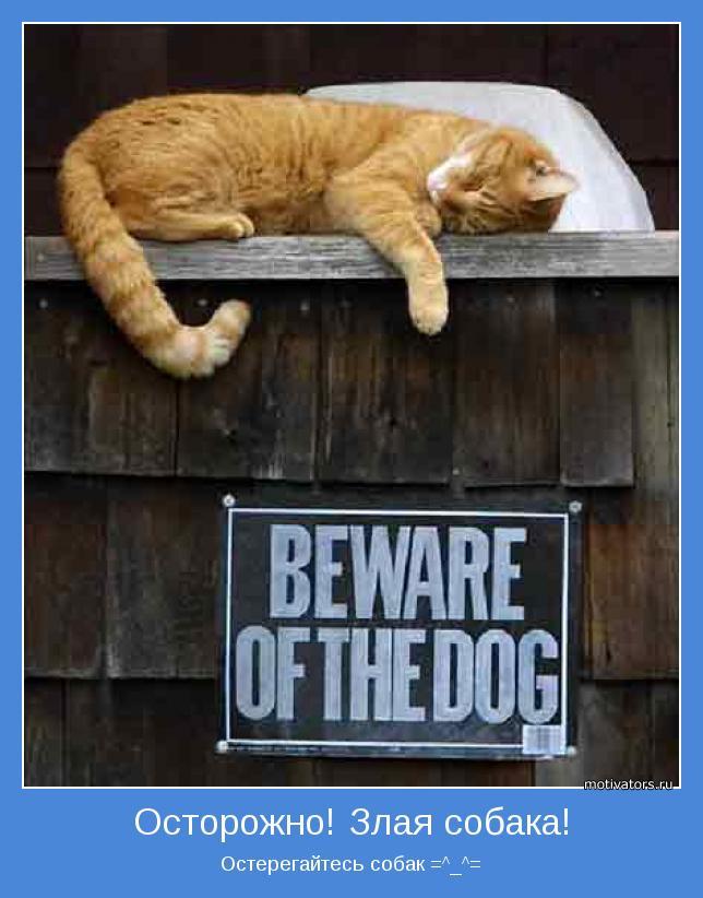 Остерегайтесь собак =^_^=
