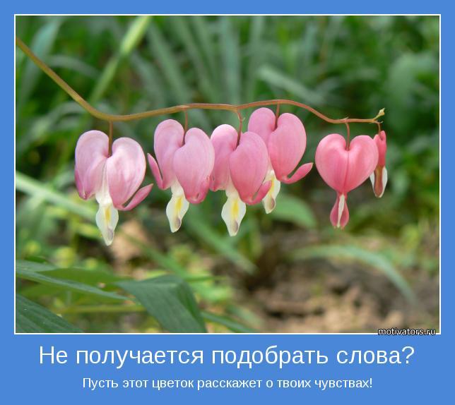 Пусть этот цветок расскажет о твоих чувствах!