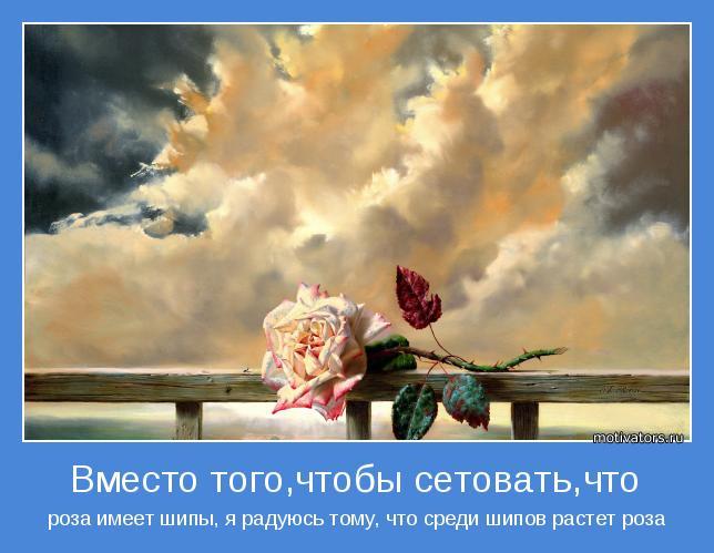 роза имеет шипы, я радуюсь тому, что среди шипов растет роза