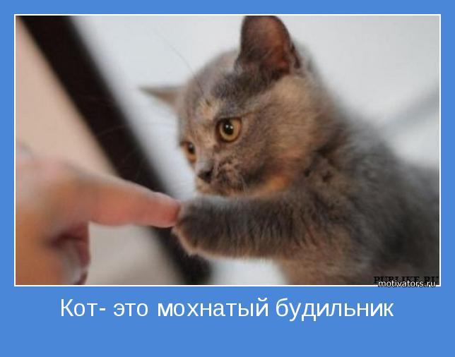 Кот мотиваторы