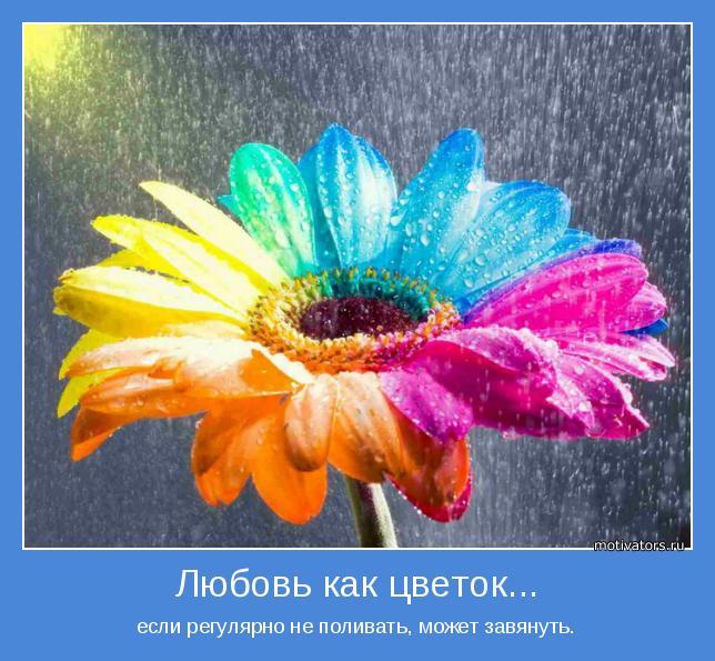 Как цветок так расстояние