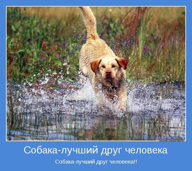 собака лучший друг человека