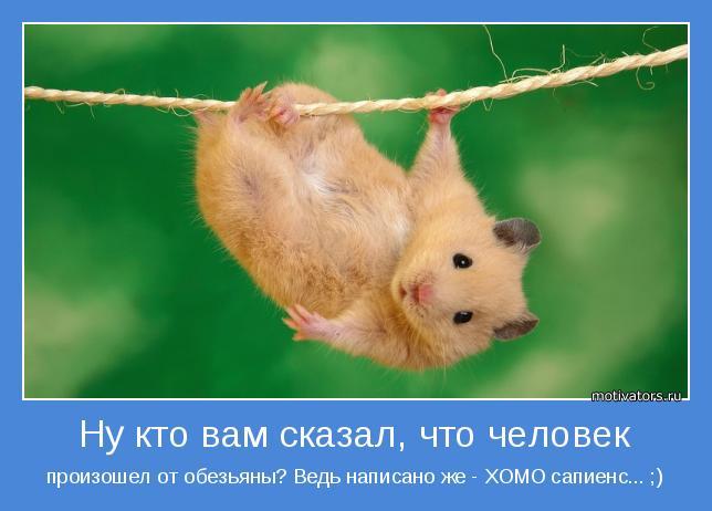 произошел от обезьяны? Ведь написано же - ХОМО сапиенс... ;)