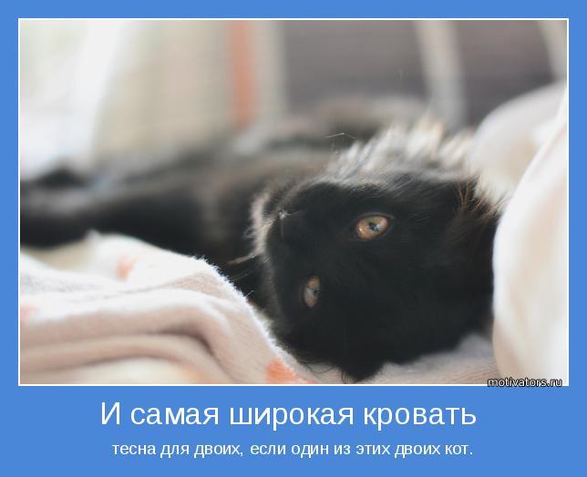 тесна для двоих, если один из этих двоих кот.