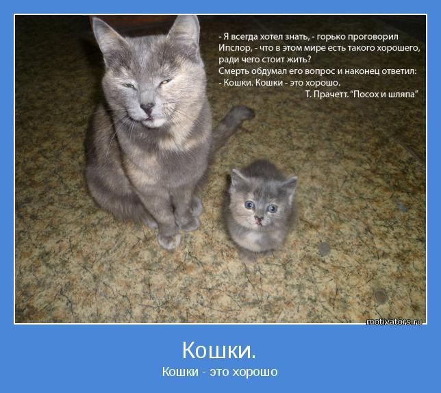 Кошки - это хорошо