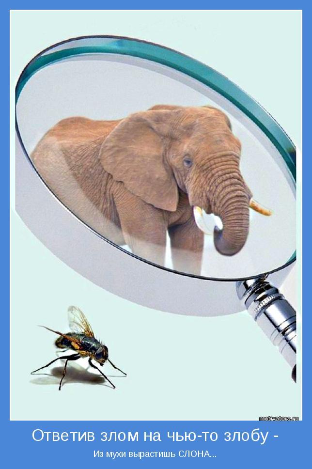 Из мухи вырастишь СЛОНА...