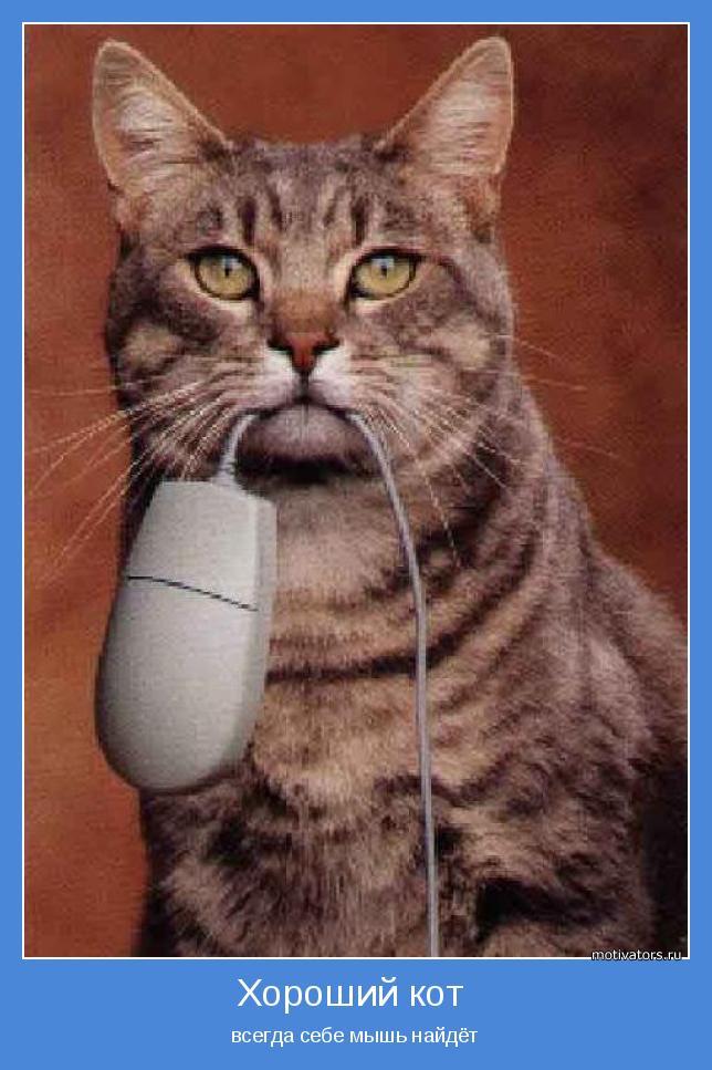 всегда себе мышь найдёт