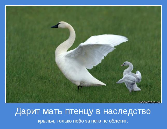 крылья, только небо за него не облетит.