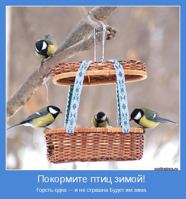 Картинки или покормите птиц зимой