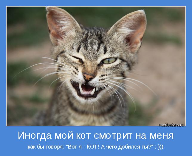 """как бы говоря: """"Вот я - КОТ! А чего добился ты?"""" :-)))"""