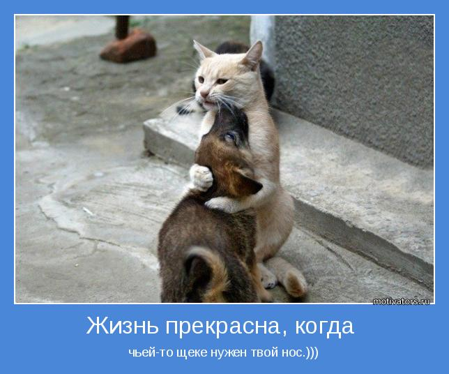 http://motivators.ru/sites/default/files/imagecache/main-motivator/motivator-44060.jpg