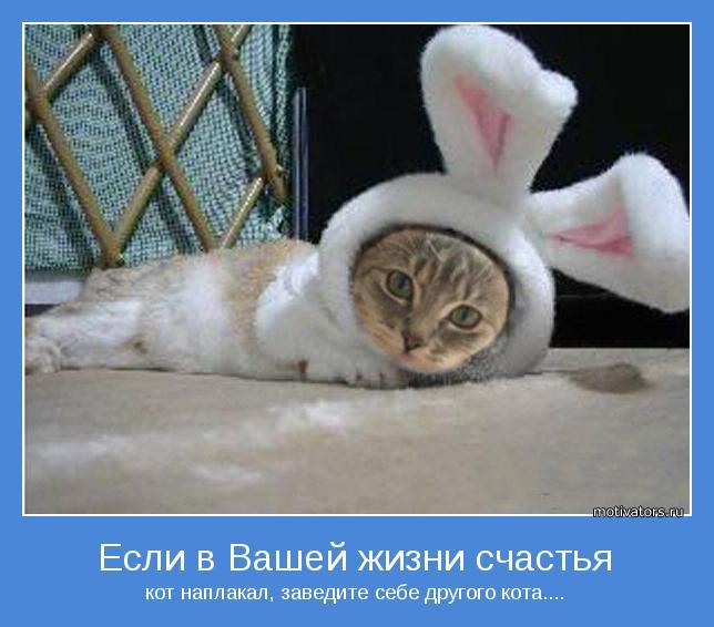 кот наплакал, заведите себе другого кота....