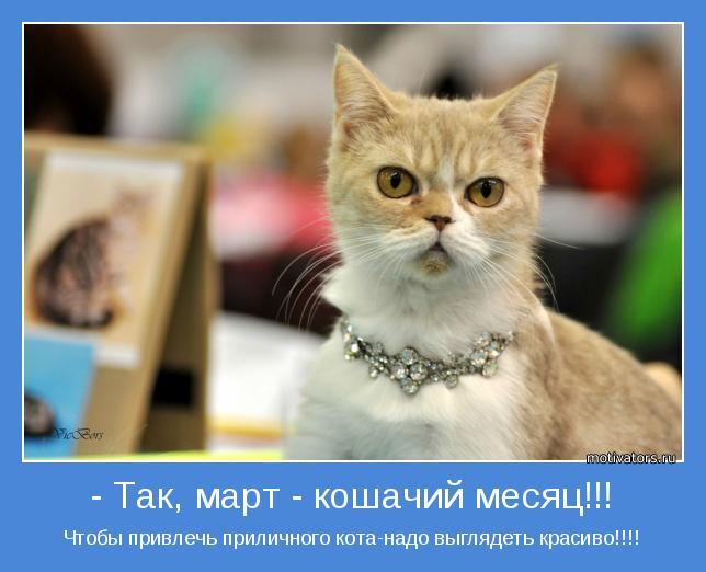 Чтобы привлечь приличного кота-надо выглядеть красиво!!!!
