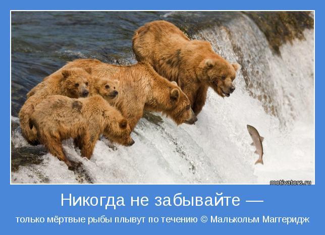только мёртвые рыбы плывут по течению © Малькольм Маггеридж