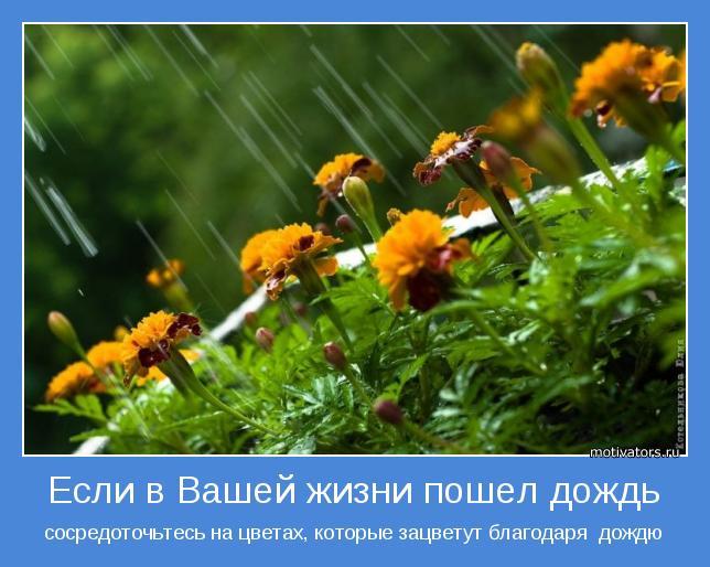 сосредоточьтесь на цветах, которые зацветут благодаря  дождю
