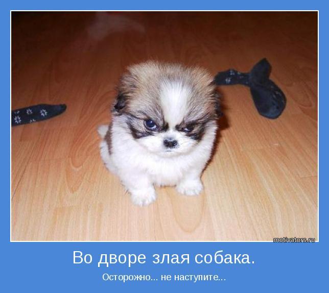 Пожалуйста, не наступите...