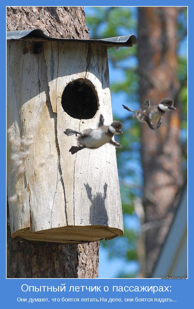 Они думают, что боятся летать.На деле, они боятся падать...