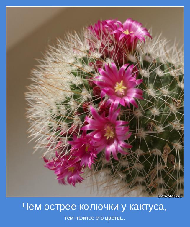 тем нежнее его цветы...