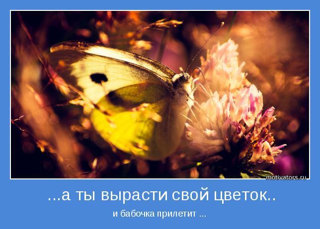 и бабочка прилетит ...