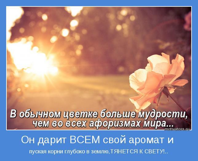 пуская корни глубоко в землю,ТЯНЕТСЯ К СВЕТУ!..
