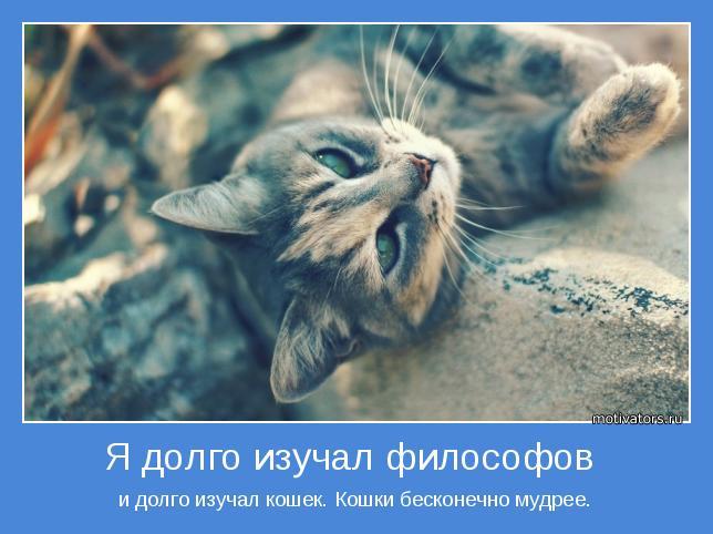 и долго изучал кошек. Кошки бесконечно мудрее.