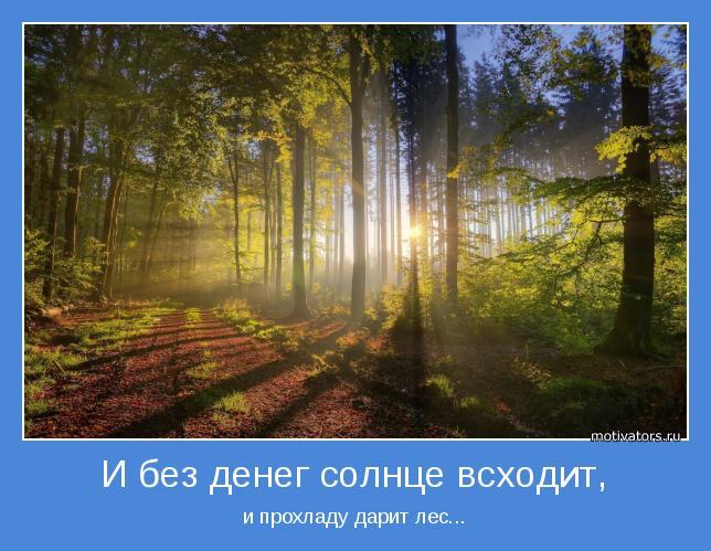 и прохладу дарит лес...