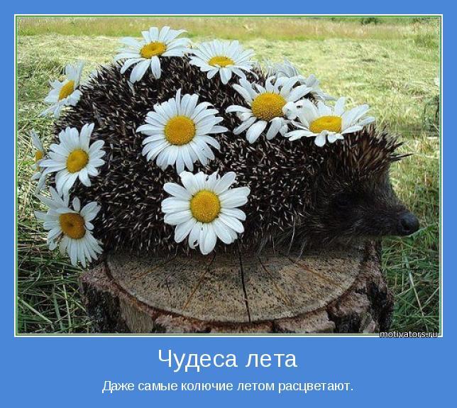 Даже самые колючие летом расцветают.