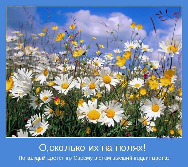 Но каждый цветет по-Cвоему-в этом высший подвиг цветка
