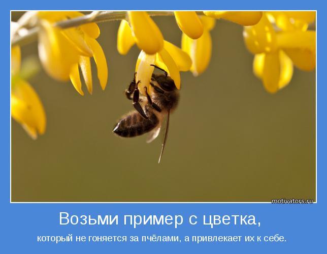 который не гоняется за пчёлами, а привлекает их к себе.