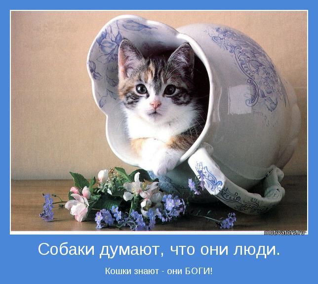 Кошки знают - они БОГИ!