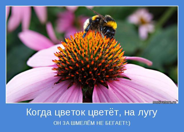 ОН ЗА ШМЕЛЁМ НЕ БЕГАЕТ!:)