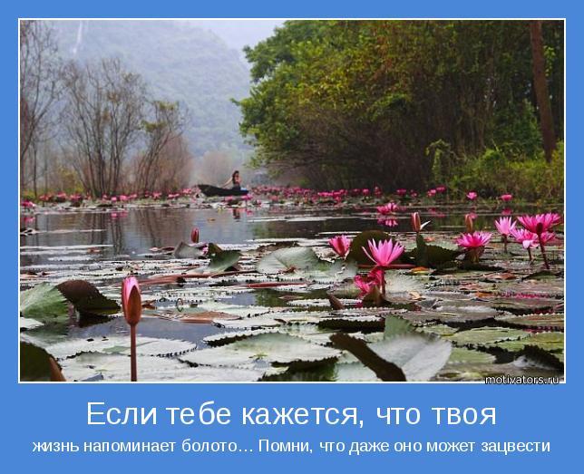 жизнь напоминает болото… Помни, что даже оно может зацвести