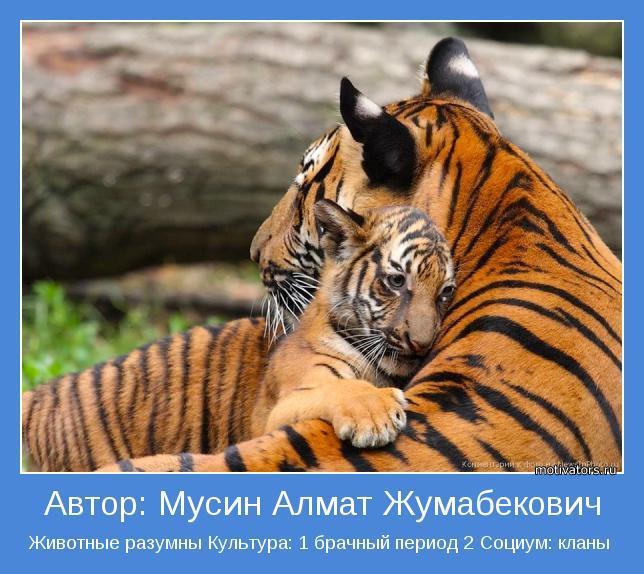 Животные разумны Культура: 1 брачный период 2 Социум: кланы