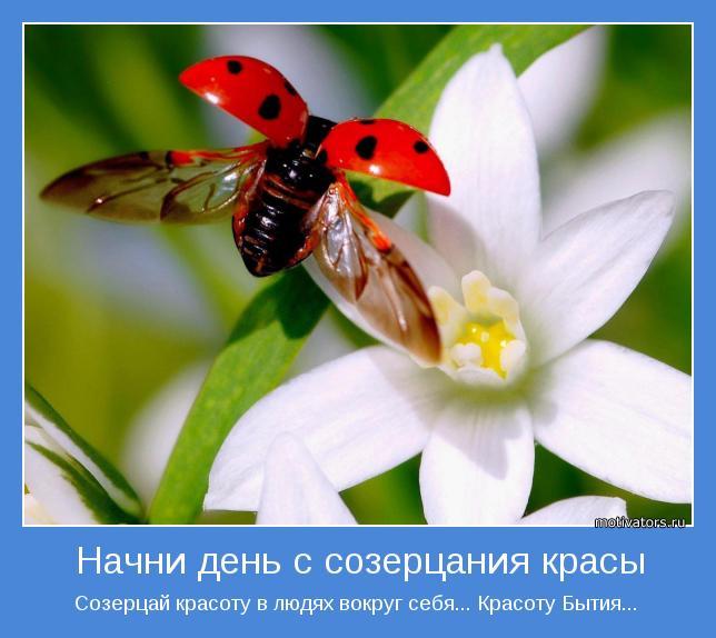 Созерцай красоту в людях вокруг себя... Красоту Бытия...