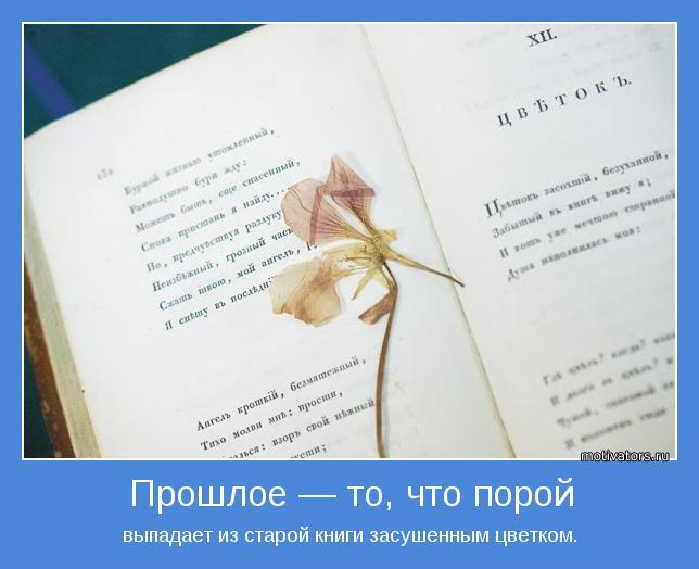 Засушенные цветы в книге