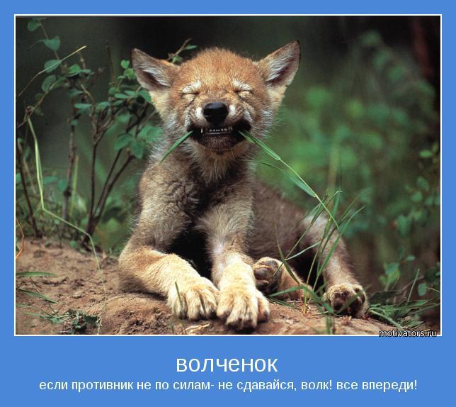 если противник не по силам- не сдавайся, волк! все впереди!
