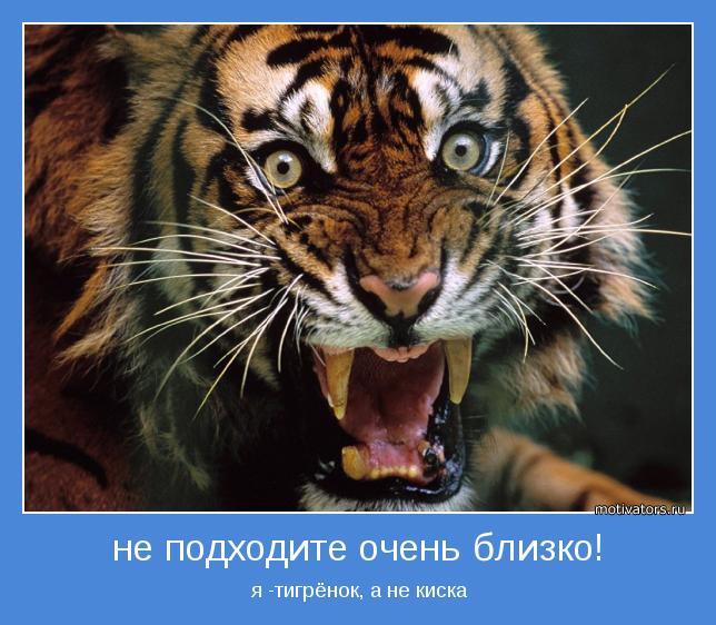 я -тигрёнок, а не киска