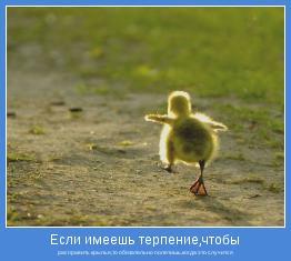 расправить крылья,то обязательно полетишь,когда это случится