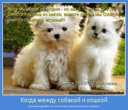 возникает дружба, то это не иначе, как союз против повара.))