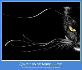 из кошачьих - совершенство. (Леонардо да Винчи)